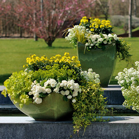 Gestaltungsideen mit frühjahrsblumen   frühlingsflirt