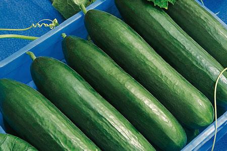 Cucumber Paska