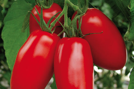 Tomate Agro