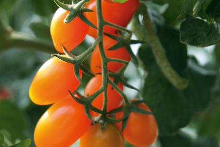 Tomato Orange Fizz