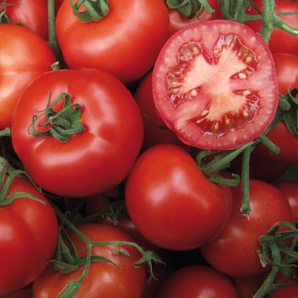 veredelte tomate serrat gourmetzauber. Black Bedroom Furniture Sets. Home Design Ideas