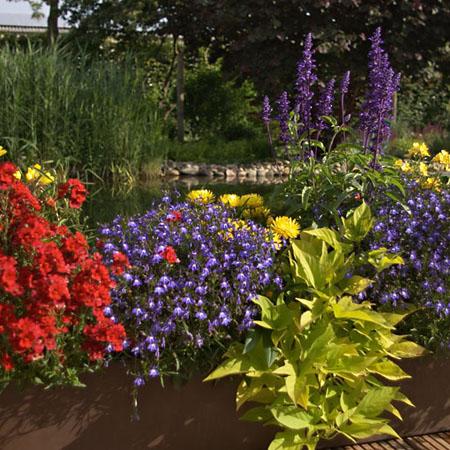 Balkonkasten in bunten Farben pflanzen