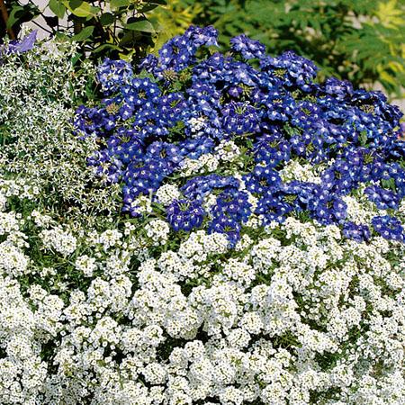 Erfrischende Farben in blau und weiß
