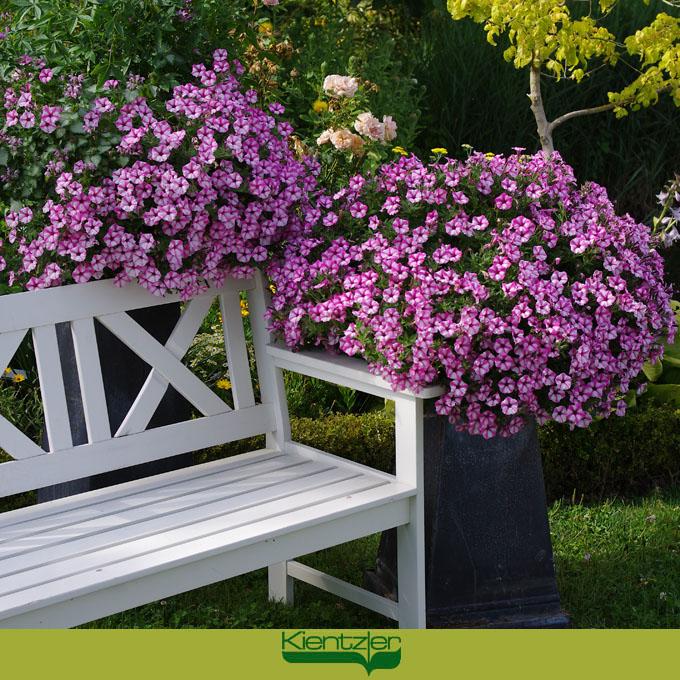 Sommergarten Von Kientzler Sommer Blumen Pflanzen Pflege