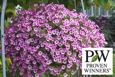 Proven Winners Garten