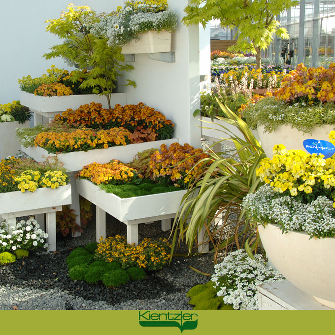 Frühlingsflirt Pflanzen kaufen