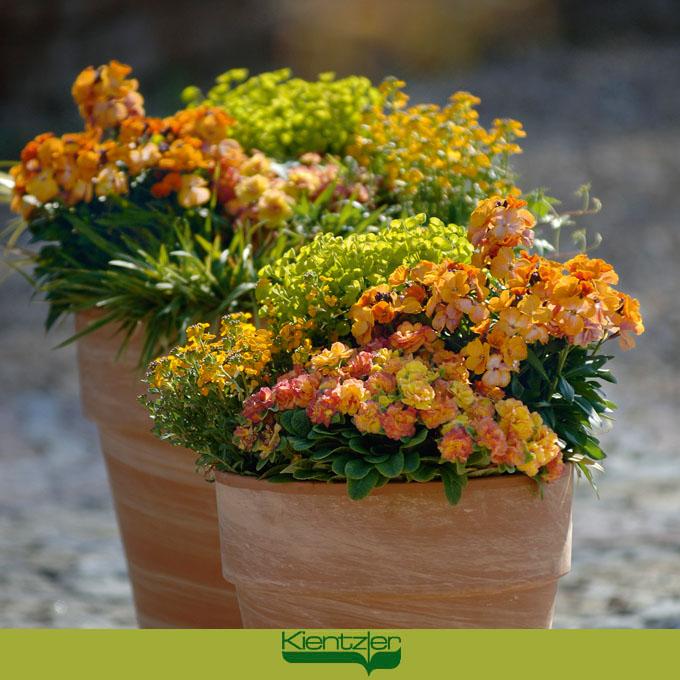 zauberhafte Pflanzideen für den Frühling