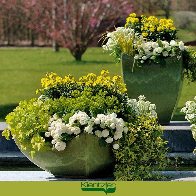 Frische Fruhlingspflanzen In Weiss Und Gelb Fruhlingsflirt