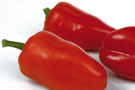 Paprika  Snacky Red