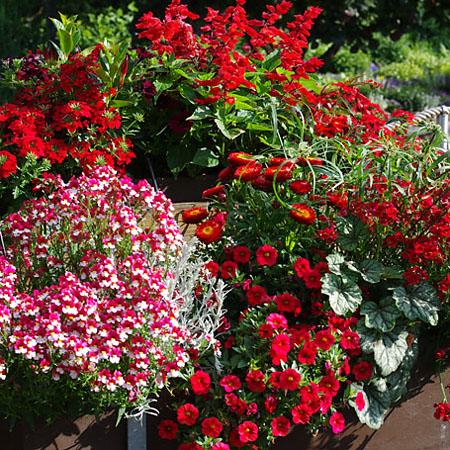 Balkon und Terrasse in rot und wieß
