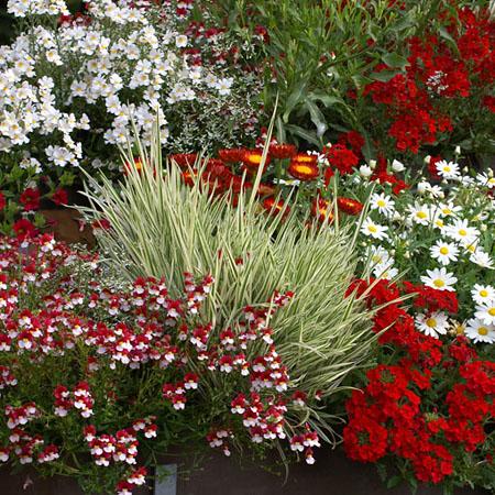 Blumen für den Balkon in rot und wieß
