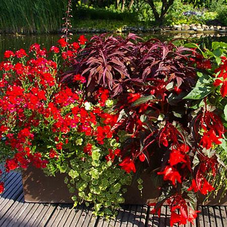Spannende Pflanzen für den Balkon