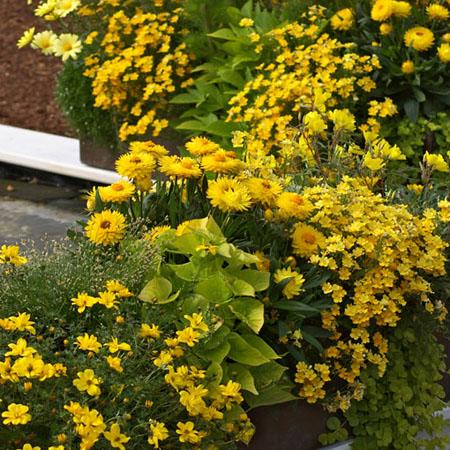 Gestaltungsideen in gelb
