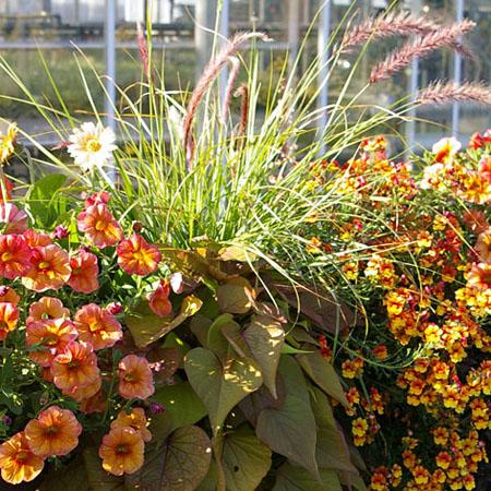 Modernes Pflanzen in orange