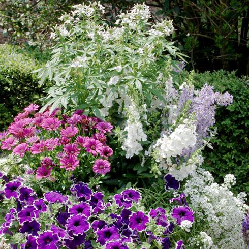 Pflanzidee für Ihren Blumenkübel