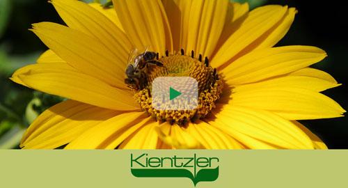 Bienenpflanzen für Balkon und Terrasse